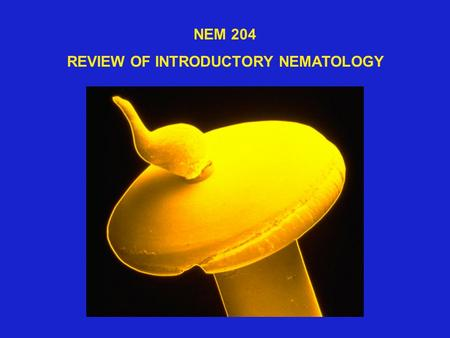 NEM 204 REVIEW OF INTRODUCTORY NEMATOLOGY. CROP ESTI-ACRESFARM $$ LOSS MATEDVALUE % LOSS FIELD CROPS 61,091,1662,791,345,185307,047,970 FRUITS & NUTS.