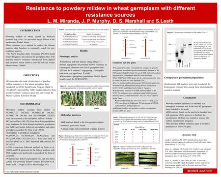 Resistance to powdery mildew in wheat germplasm with different resistance sources L. M. Miranda, J. P. Murphy, D. S. Marshall and S.Leath NC STATE UNIVERSITY.