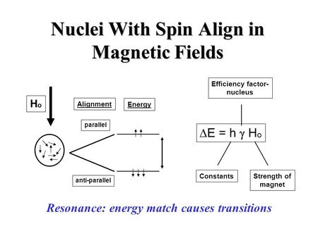 Nuclei With Spin Align in Magnetic Fields HoHo anti-parallel parallel Alignment Energy  E = h  H o Efficiency factor- nucleus ConstantsStrength of magnet.