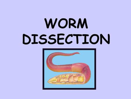 WORM DISSECTION.