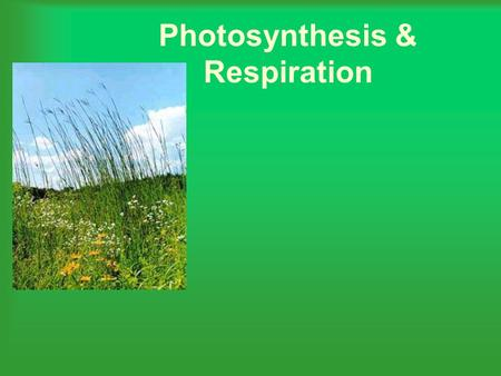 "Photosynthesis & Respiration. What happens during photosynthesis? Plants ""capture"" light energy and use that energy to make glucose. Oxygen is also released."