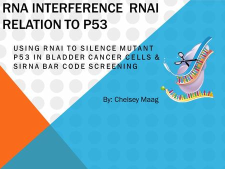 RNA INTERFERENCE RNAI RELATION TO P53 USING RNAI TO SILENCE MUTANT P53 IN BLADDER CANCER CELLS & SIRNA BAR CODE SCREENING By: Chelsey Maag.