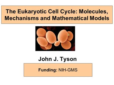 The Eukaryotic Cell Cycle: Molecules, Mechanisms and Mathematical Models John J. Tyson Biological Sciences, Virginia Tech & Virginia Bioinformatics Institute.
