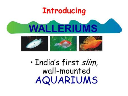 Introducing India's first slim, wall-mounted AQUARIUMS WALLERIUMS.