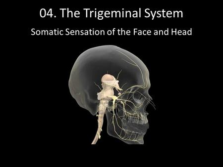 Somatic Sensation of the Face and Head