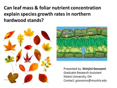Can leaf mass & foliar nutrient concentration explain species growth rates in northern hardwood stands? Presented by: Shinjini Goswami Graduate Research.