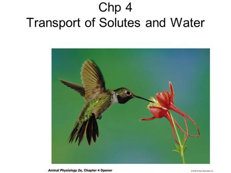 Chp 4 Transport of Solutes and Water. Review 1- The intracellular and extracellular fluids are similar in osmotic concentration but very different in.