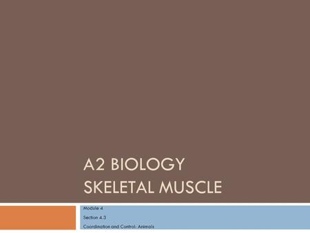 A2 BIOLOGY SKELETAL MUSCLE Module 4 Section 4.3 Coordination and Control: Animals.