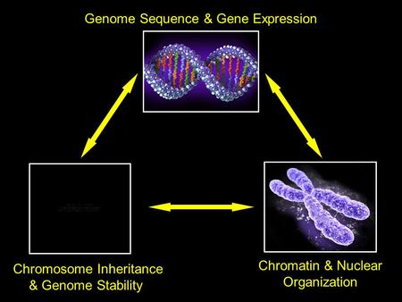 Genome Sequence & Gene Expression Chromatin & Nuclear Organization Chromosome Inheritance & Genome Stability.