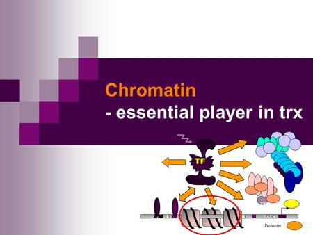 Chromatin - essential player in trx TATA Promoter TBP TF.