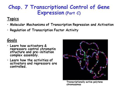 Chap. 7 Transcriptional Control of Gene Expression (Part C) Topics Molecular Mechanisms of Transcription Repression and Activation Regulation of Transcription.