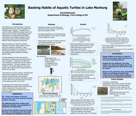 Basking Habits of Aquatic Turtles in Lake Marburg David Batchelor Department of Biology, York College of PA Painted Red Eared Slider Red Bellied Hypotheses.