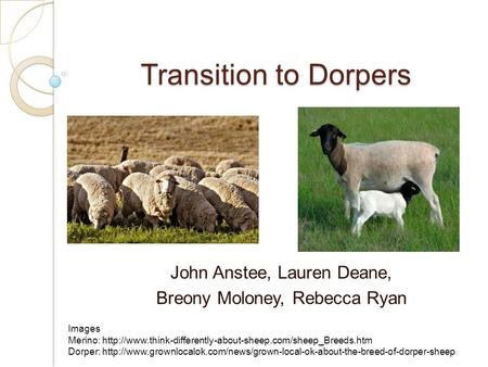 Transition to Dorpers John Anstee, Lauren Deane, Breony Moloney, Rebecca Ryan Images Merino: