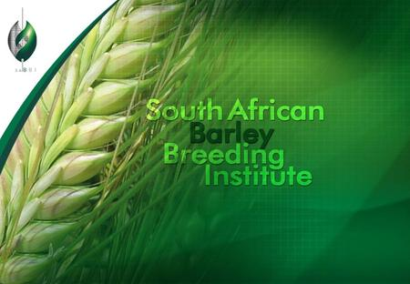 SABBI Barley Program ●SMART breeding (Selection with Markers and Advanced Reproductive Technologies) ●Conventional breeding ●Doubled haploid production.