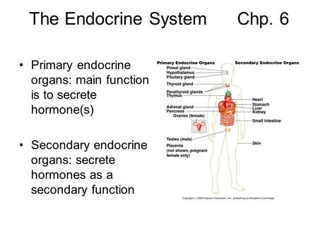 The Endocrine System Chp. 6 Primary endocrine organs: main function is to secrete hormone(s) Secondary endocrine organs: secrete hormones as a secondary.