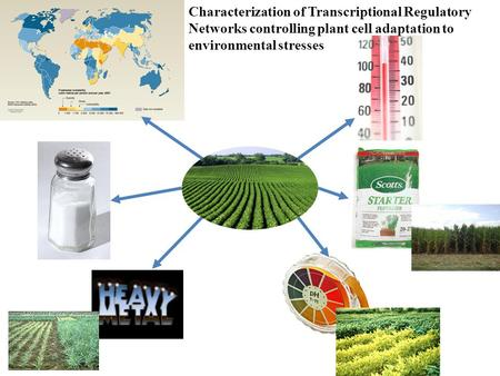 Characterization of Transcriptional Regulatory Networks controlling plant cell adaptation to environmental stresses.