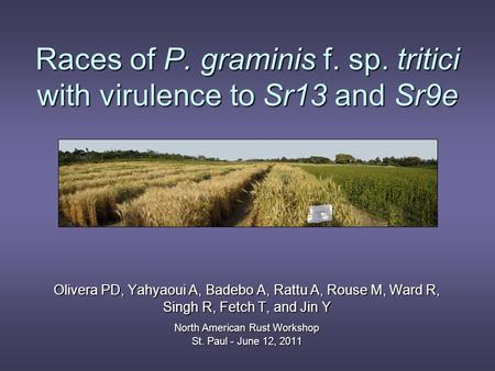 Races of P. graminis f. sp. tritici with virulence to Sr13 and Sr9e Olivera PD, Yahyaoui A, Badebo A, Rattu A, Rouse M, Ward R, Singh R, Fetch T, and Jin.