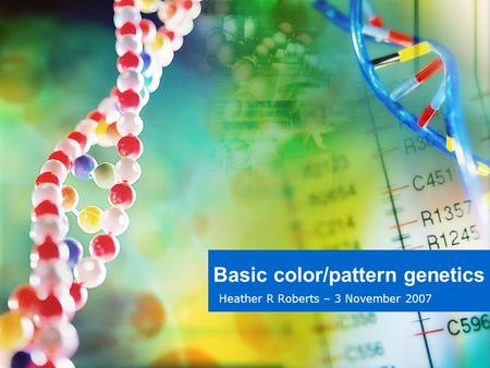 Basic color/pattern genetics Heather R Roberts – 3 November 2007.