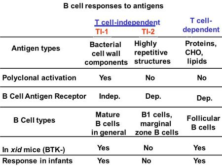 Response in infants Polyclonal activation B Cell types B cell responses to antigens In xid mice (BTK-) Antigen types B Cell Antigen Receptor TI-2TI-1 Mature.