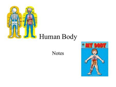 Human Body Notes. An Overview of Anatomy and Physiology Anatomy – the study of the structure and shape of the body and body parts and their relationship.
