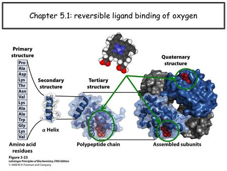 Chapter 5.1: reversible ligand binding of oxygen.