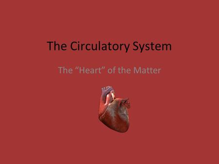 "The Circulatory System The ""Heart"" of the Matter."