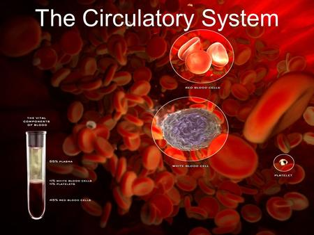 The Circulatory System. Transportation system of a living organism (move things around body like streets and highways of a city) Humans have closed circulatory.