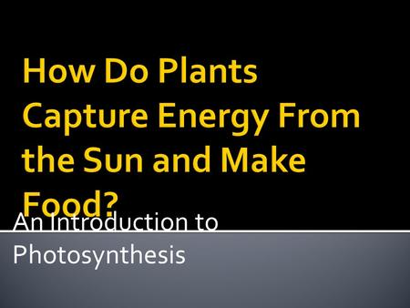 How Do Plants Capture Energy From the Sun and Make Food?
