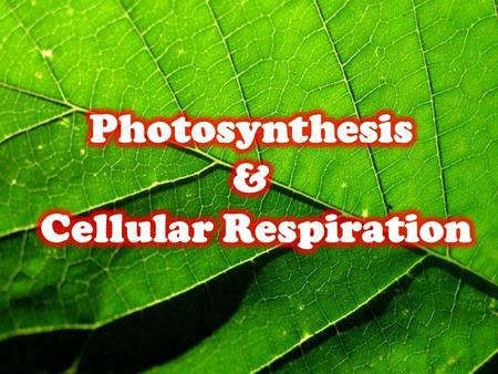 Photosynthesis & Cellular Respiration.