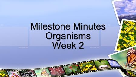 Milestone Minutes Organisms Week 2. Plants obtain energy through the process of photosynthesis  Occurs in the chloroplast, chlorophyll (pigment) traps.