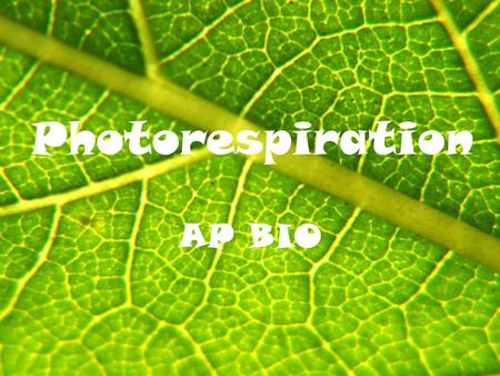 Photorespiration AP BIO. Review Stomates need to be OPEN for gas exchange to occur in the leaf However, open stomates can lead to dehydration due to transpiration.