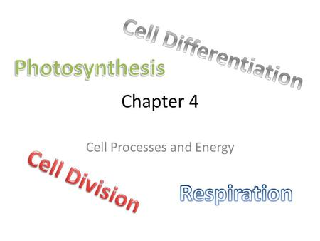 Chapter 4 Cell Processes and Energy. 4.1 Photosynthesis.
