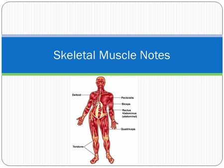 Skeletal Muscle Notes.