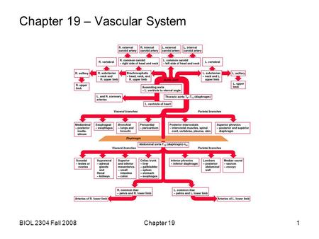 BIOL 2304 Fall 2008Chapter 191 Chapter 19 – Vascular System.