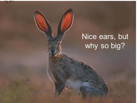 Fig. 40-1 Nice ears, but why so big?. Overview: Diverse Forms, Common Challenges Anatomy is the study of the biological form of an organism Physiology.