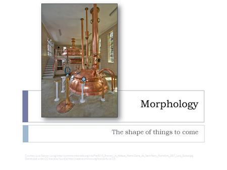 Morphology The shape of things to come Courtesy Luca Galuzzi (Lucag)