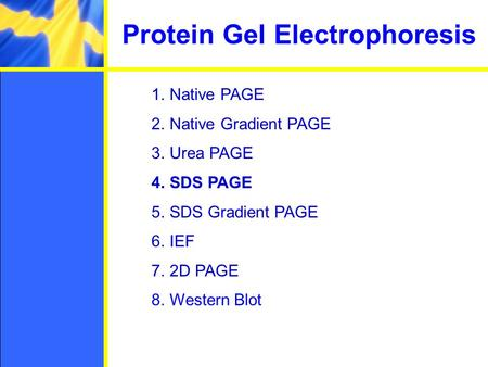 Protein Gel Electrophoresis 1.Native PAGE 2.Native Gradient PAGE 3.Urea PAGE 4.SDS PAGE 5.SDS Gradient PAGE 6.IEF 7.2D PAGE 8.Western Blot.