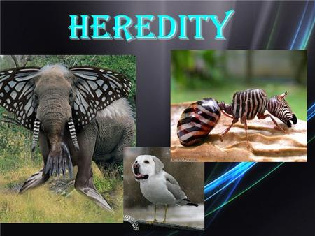 Heredity. Chapter 10 Patterns of Inheritance Observations?