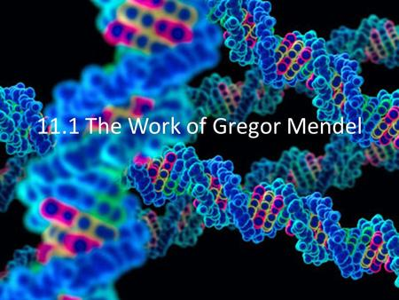 11.1 The Work of Gregor Mendel