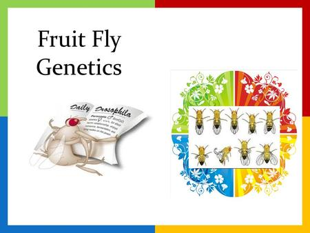 Fruit Fly Genetics.