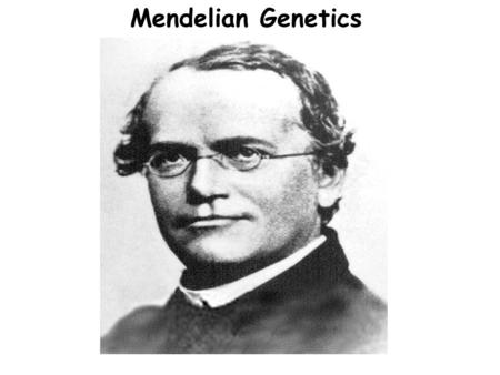 Mendelian Genetics. About Gregor Mendel Gregor Mendel was an Austrian monk who studied science and math in the mid-19 th century (1850's) -- Mendel was.