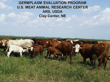 GERMPLASM EVALUATION PROGRAM U.S. MEAT ANIMAL RESEARCH CENTER ARS, USDA Clay Center, NE.