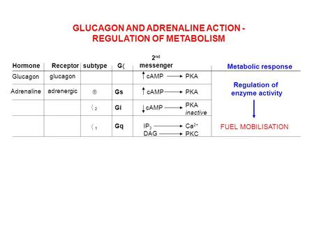 GLUCAGON AND ADRENALINE ACTION - REGULATION OF METABOLISM