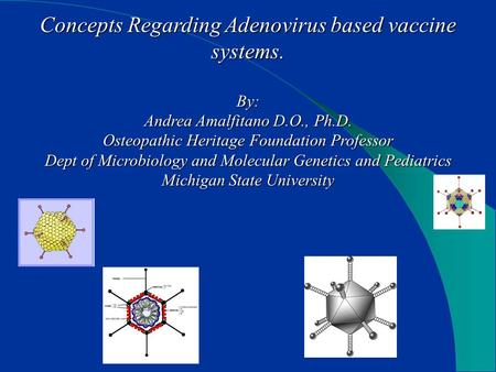 Concepts Regarding Adenovirus based vaccine systems. By: Andrea Amalfitano D.O., Ph.D. Osteopathic Heritage Foundation Professor Dept of Microbiology and.