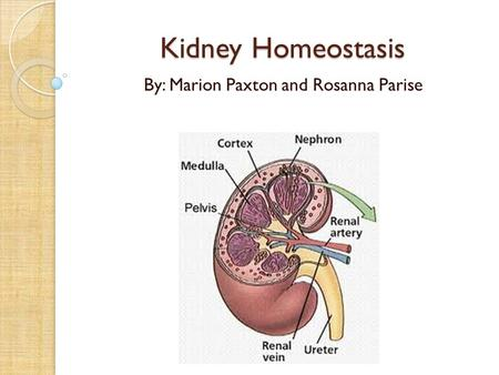 Kidney Homeostasis By: Marion Paxton and Rosanna Parise.