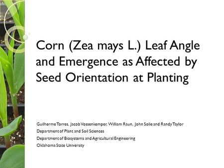 Corn (Zea mays L.) Leaf Angle and Emergence as Affected by Seed Orientation at Planting Guilherme Torres, Jacob Vossenkemper, William Raun, John Solie.