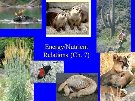 Energy/Nutrient Relations (Ch. 7). Lecture Outline 1) Major methods of gaining energy 2) Limitations on energy gain –Plants –Animals.