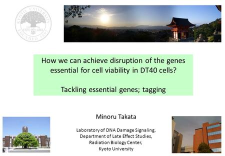 How we can achieve disruption of the genes essential for cell viability in DT40 cells? Tackling essential genes; tagging Minoru Takata Laboratory of DNA.