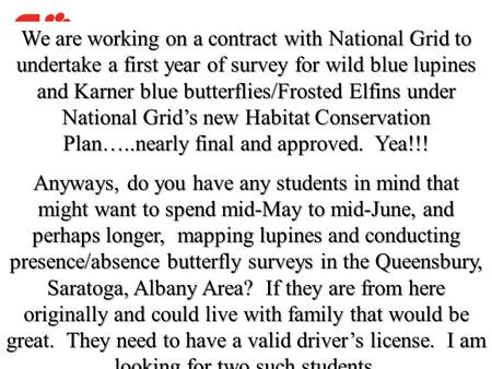 We are working on a contract with National Grid to undertake a first year of survey for wild blue lupines and Karner blue butterflies/Frosted Elfins under.