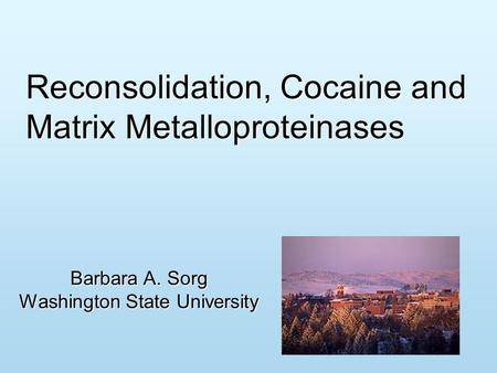 Reconsolidation, Cocaine and Matrix Metalloproteinases Barbara A. Sorg Washington State University.